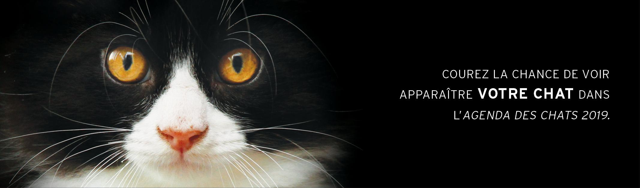 Concours - Agenda des chats 2018