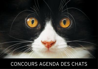 Concours Agenda des chats 2019