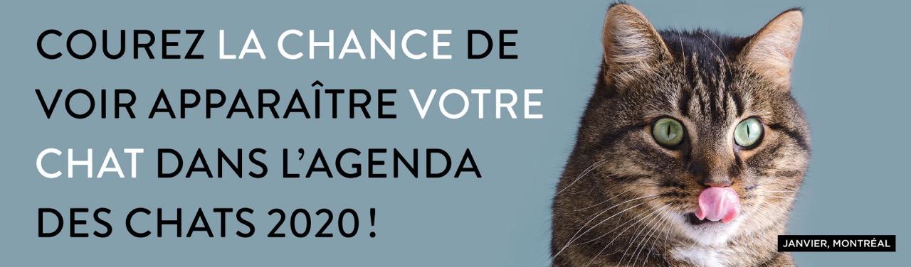 site de chat montreal